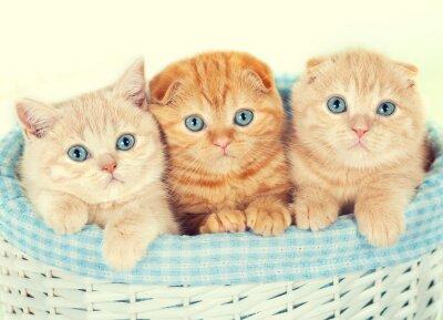 Carta da parati Tre piccoli gattini nel paniere
