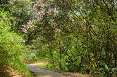 Carta da parati trilha entre árvores
