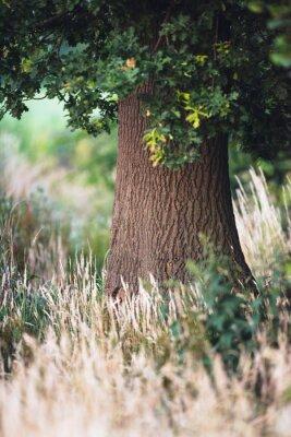 Carta da parati Tronco d'albero tra alta erba gialla.