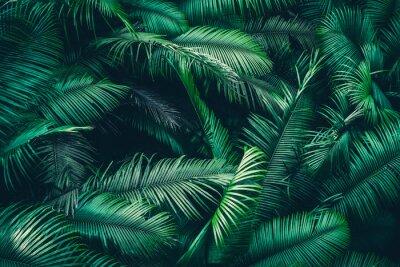 Carta da parati tropical forest natural background, nature scene in green tone style