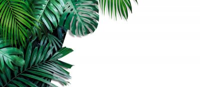Carta da parati Tropical leaves banner on white background with copy space
