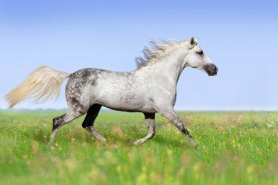 Carta da parati trotto Cavallo bianco sul prato estivo