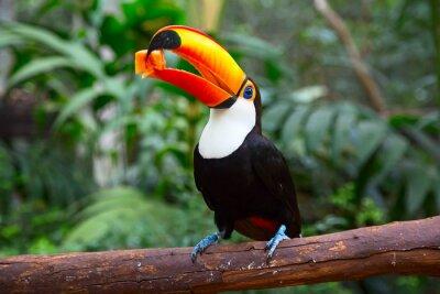 Carta da parati tucan colorato