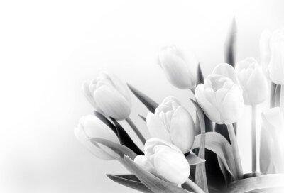 Carta da parati Tulipani bianchi su sfondo bianco bw