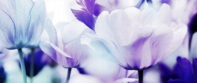 Carta da parati tulipani ciano viola ultra leggero