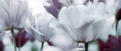 Carta da parati tulipani colorati concetto