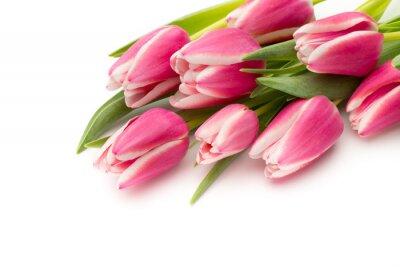 Carta da parati Tulipani rosa su sfondo bianco.