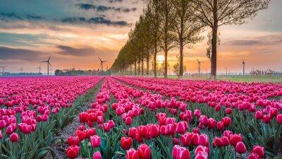 Carta da parati tulipano tramonto 05