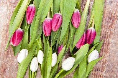 Carta da parati tulpen