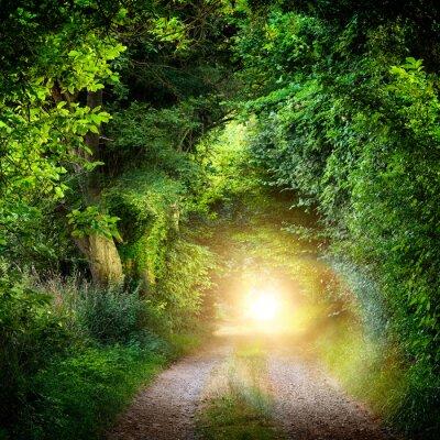 Carta da parati Tunnel aus Bäumen führt ins Licht