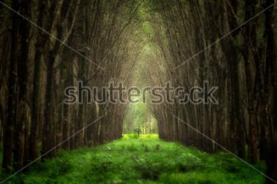 Carta da parati Tunnel di alberi immaginari. Fantasia di foresta naturale.