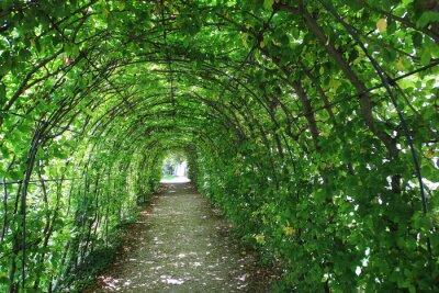Carta da parati tunnel verde in giardino