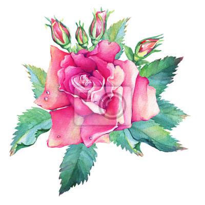Un Bel Fiore Rosa Rosa Con Boccioli E Foglie Verdi Disegno A Carta