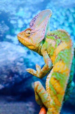 Carta da parati Un camaleonte verde