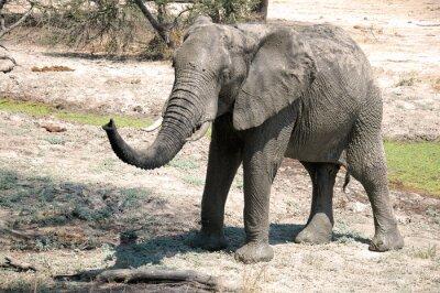Carta da parati Un elefante nella savana - Tanzania - Africa