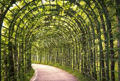 Carta da parati Una bella arcata verde nel parco con un sentiero.