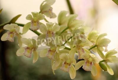 Carta da parati Una Bella Orchidea in Thailandia