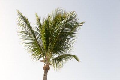 Carta da parati Una palma di cocco e cielo blu