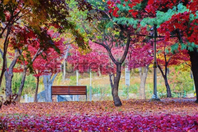 Carta da parati Una panchina in un parco con molte foglie di acero rosso. Posto pacifico.