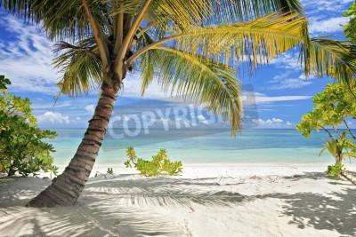 Carta da parati Una scena di palme e spiaggia di sabbia in isola Maldive