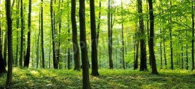 Carta da parati Una strada rurale attraverso una foresta piena di alberi.