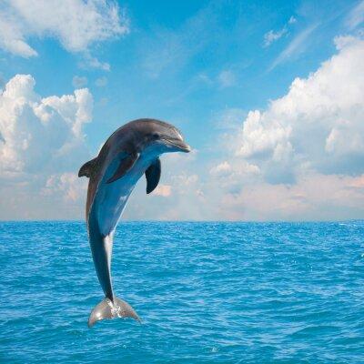 Carta da parati uno delfini che saltano
