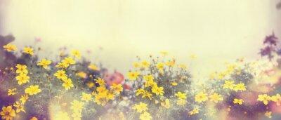 Carta da parati Vari fiori colorati in luce del sole, sfocatura, banner per il sito web, confine