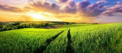 Carta da parati Vasto campo verde al tramonto splendido, un paesaggio panoramico colorato