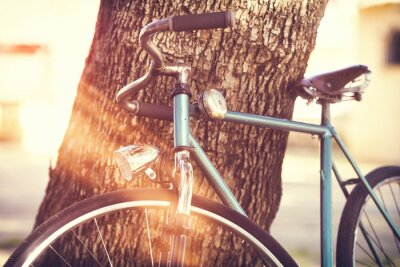 Carta da parati Vecchia bicicletta appoggiata a un albero
