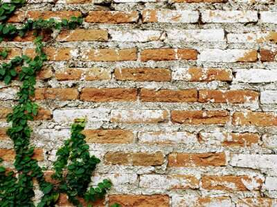 Carta da parati Vecchio muro di mattoni con creeper