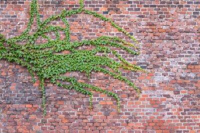 Carta da parati Vecchio muro di mattoni rossi ricoperta di edera