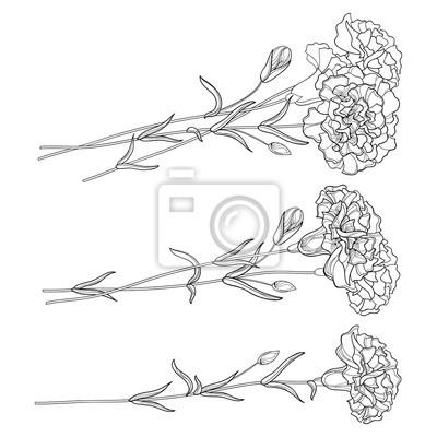 Vector Set Con Carnation Contorno Fiore Germoglio E Le Foglie