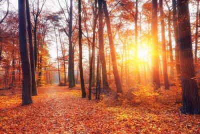 Carta da parati vibrante tramonto nella foresta di autunno