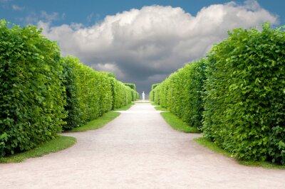 Carta da parati vicolo nel parco con alberi esattamente topiaria