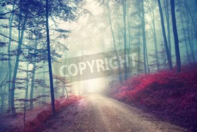 Carta da parati Vintage effetto di colore strada bosco in autunno con la luce di fantasia. effetto filtro Vintage utilizzato.