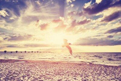 Carta da parati Vintage tramonto sul mare tonica con uccello che vola di fronte.