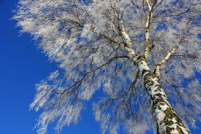 Carta da parati Vista del cielo invernale