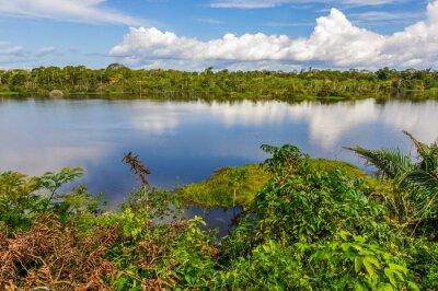 Carta da parati Vista del lago nella Foresta Amazzonica, Manaos, Brasile