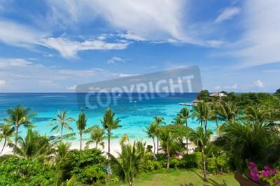 Carta da parati Vista mare dall'alto, spiaggia tropicale con palme da cocco