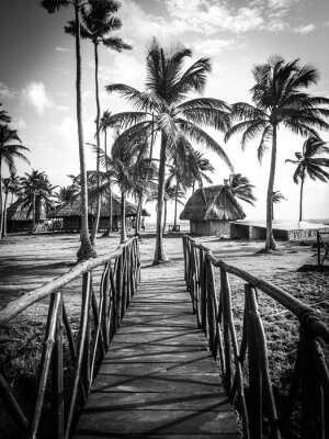 Carta da parati Vita dell'isola