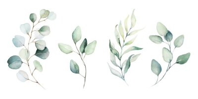 Carta da parati Watercolor floral illustration set - green leaf branches collection, for wedding stationary, greetings, wallpapers, fashion, background. Eucalyptus, olive, green leaves, etc.