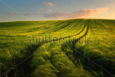 Carta da parati Wheat field landscape with path in the sunset time