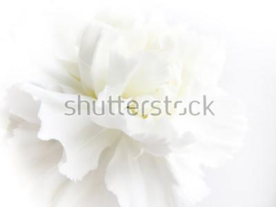 Carta da parati White flowers background. Macro of white petals texture. Soft dreamy image