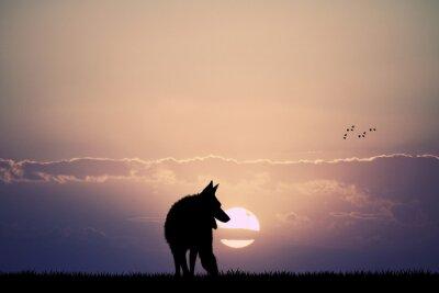 Carta da parati wolf at sunset