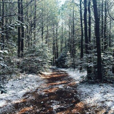 Carta da parati Woods invernali