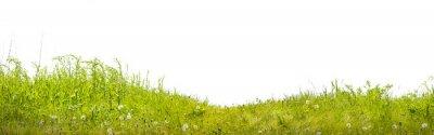 Carta da parati земля с зеленой травой на белом фоне