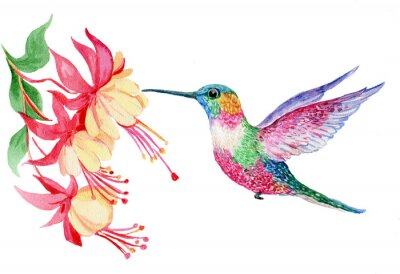 Carta da parati акварель, маленькая птичка колибри, иллюстрация
