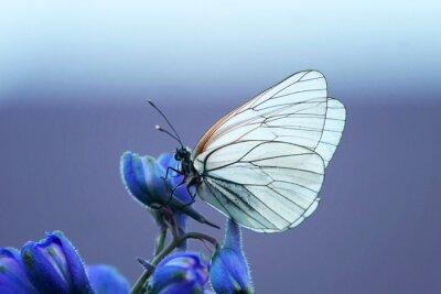 Carta da parati белая бабочка на синем цветке