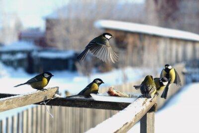 Carta da parati птица синица зима кормушка много