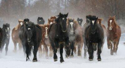 Carta da parati 雪原 を 走 る 馬